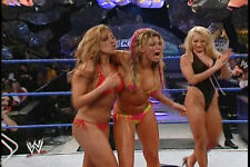 WWE Divas 1,200 Pictures Collection DVD (Photo/Images Disc)