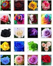 US-Seller 20 kind different colors of flower seeds are mixed together(200 Pcs)
