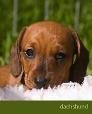 So Cute Puppies: Dachshund : A Gift Journal for People Who Love Dogs:...