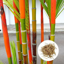 150 Pieces Green Tinwa Phyllostachys Pubescens Moso-Bamboo Seeds Garden Plants