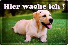 Hier wache ich Labrador Retriever 2 Blechschild Schild Blech Tin Sign 20 x 30 cm