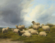 Cooper Sidney Thomas Sheep In A Pasture Canvas 16 x 20   #5900