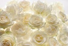 NON WOVEN giant wallpaper 368x248cm White rose flowers design wall mural decor