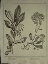 1806 DATED FLOWER PRINT ~ STRAWBERRY TREE ~ YALLOW ALYSSUM