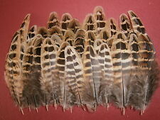 "100 Hen Pheasant Wing Hackle Feathers 2"" - 4"" - Crafting feathers"