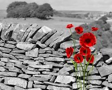 Red Poppies Gray  Floral Home Decor Wall Art Photo Print Bedroom Bathroom Pict.