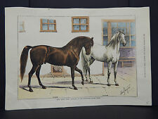 Illustrated Sporting And Dramatic News 3s20 Horses - Arab Nijdeh Breed Aug 1880