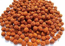 Rudraksha Rudraksh 5 Mukhi Loose 6mm Beads Yoga Meditation Wholesale Lot of 1001