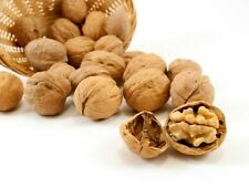 ENGLISH  WALNUTS   IN  SHELL  6 lbs  *CRACK IT * FEED IT * EAT  IT * Best Deal