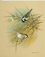 The Marsh Tit & The Coal Tit - Vintage 1965 Bird Print by Basil Ede