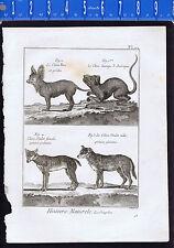 Wild Dogs - Chien Mullet, Chien Turc 1792 Antique Print- Quadrupeds