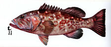 Red Grouper Profile Decal Bumper Sticker Gifts Men Fishermen Fish Fishing
