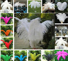Lots 10pcs High Quality Natural OSTRICH FEATHERS Fit Wedding Party Decor