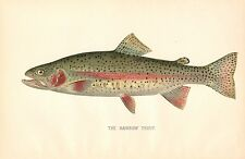 Rare 1892 Antique Denton Fish Print ~ Rainbow Trout ~ Excellent Details!