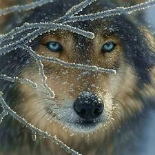 DIY 5D Diamond Painting Wolf Embroidery Cross Crafts Stitch Home Decor New