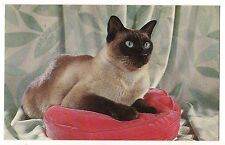 Pure Breed Sealpoint SIAMESE CAT Blue Eyes on Red Pillow Postcard Bred Blue Eyes