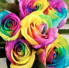 200Pcs Colorful Rainbow Rose Flower Seeds Home Garden Plants Multi-Color New
