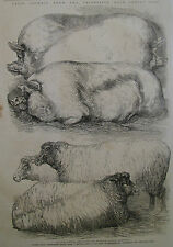 SMITHFIELD CATTLE SHOW PIGS SHEEP 1865 ILLUSTRATED LONDON NEWS