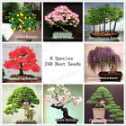 240DIY Home Garden Bonsai Tree Seeds 8 kinds Perfect Package Free Shipping