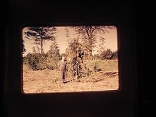 35 mm slide 1964 Marijuana farm Plant Harvest Africa Congo Huge Big Lg field wow