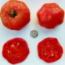 African Queen - Organic Heirloom Tomato Seeds - Beautiful Beefsteak - 40 Seeds