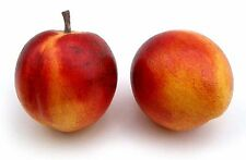 Artificial Nectarine Love Fruit, Assorted, Bag of 24 Decorative