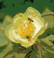 BN original cross stitch  chart of  a  Paeonia mlokosewitschii flower with bees