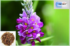 DR T&T™ 100g Ge Hua /Flower of Kudzuvine/ kudzu flower anti drunk detoxify