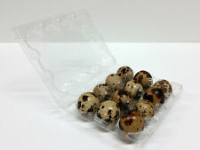 Quail Egg Cartons x 40 and Quail Egg Scissors x 1 - FREE SHIPPING!