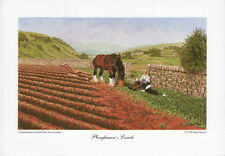 BORDER FINE ARTS - PLOUGHMAN'S LUNCH - clydesdale horse collie farm nature PRINT