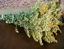Dried GOLDENROD FLOWER BUNCH Floral Decor Prim Shabby Craft Folk Wedding flower