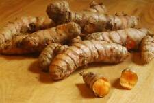 6 or 7 Turmeric Roots ,Whole,Raw ,Organic 2oz. Juice it,brew it or plant it.