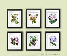 Set of 6 Purple Orchid Prints Antique Botanical Book Plate Tropical wall decor