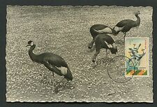 TOGO MK 1964 FAUNA KRANICH CRANE VÖGEL MAXIMUMKARTE MAXIMUM CARD MC CM d2772