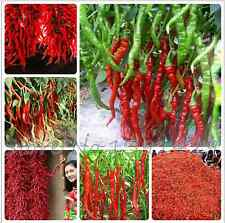 20 GRAINES DE PIMENTS ROUGES long hot chili SEMENCE