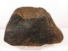 S.V.F - Fossil Coral - Polished Slice - Lithostotion junceum - U.K Specimen
