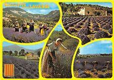 B49757 Provence Cuillette de la Lavande multi vues   france