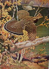 1940s Ruffed Grouse by Francis Lee Jaques