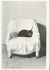 POSTCARD / CARTE POSTALE PHOTO BRIGITTE LANGEVIN CHAT SUR UN FAUTEUIL / CAT CHAT