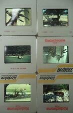 Lot of 6 Original Vintage 35mm Kodak Photo Color Slides Animals Kodachrome