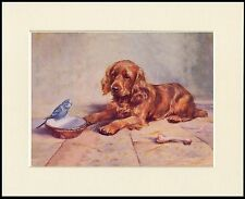 COCKER SPANIEL AND BUDGERIGAR CUTE LITTLE DOG PRINT MOUNTED READY TO FRAME