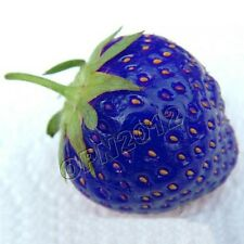 200pcs Blue Strawberry Seeds Grow Delicious Fruit Berry Bacca Plant Home Garden