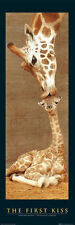 THE FIRST KISS - GIRAFFE & BABY DOOR SIZE POSTER - 21x62 ANIMAL PHOTO 0018