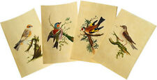 1816 Edward Donovan Birds - MANUSCRIPT INK DRAWINGS - WATERCOLOUR - Ornithology