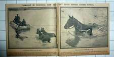 1915 Yeomanry In Training How They Get Horses To Cross Rivers