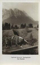 Vogelwarte Garmisch-Raubvogelstelle, Café Almhütte, Ak um 1930-Vogel-Adler-Geier