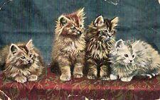 Kittens - Postcard Franked 1910