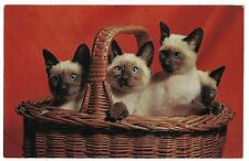 BASKET of 4 SIAMESE KITTENS Postcard Red Background Cute Adorable Cats