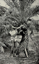 1912 Toddy Man Palm Tree Wine Neera Padaneer India Photogravure Photograph
