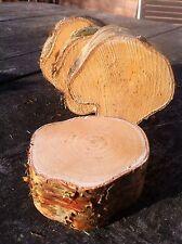 5x vero legno log Slice Silver Birch componente fondamentale Rustico Chic 10-12cmx4cm